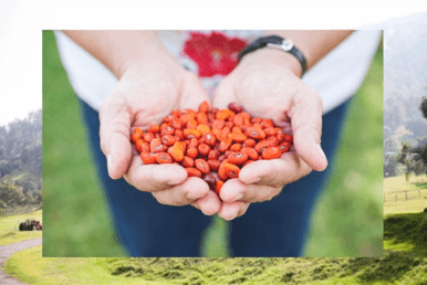 Seed Bank Seeds Hands