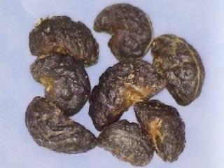 Psydrax odorata seed